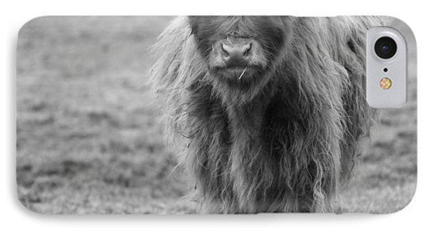 Highland Calf IPhone Case by Sonya Lang