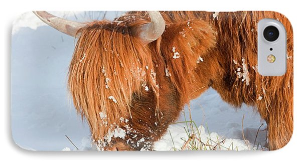 Highland Cattle Grazing IPhone Case