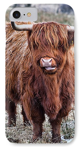 Highland Coo IPhone Case by John Farnan