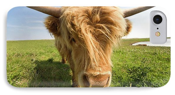 Highland Cow, North Yorkshire, England IPhone Case by John Short