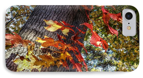 Hints Of Fall IPhone Case by Linda Unger