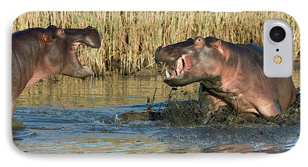 Hippopotamus Confrontation IPhone Case by Tony Camacho