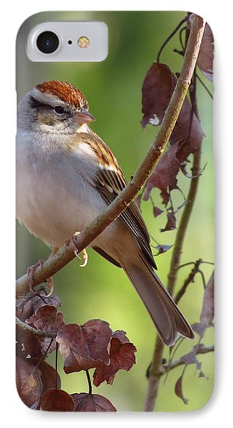IPhone Case featuring the photograph His Eyes Are On The Sparrow by Phyllis Beiser