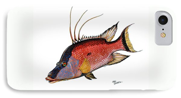 Hogfish On White IPhone Case by Steve Ozment
