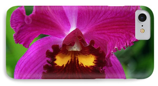 Holiday Orchid IPhone Case by William Dey