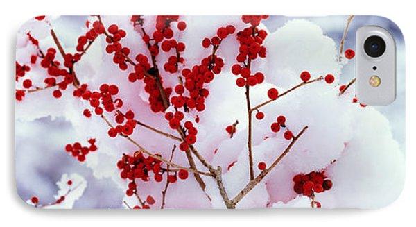 Holly Trees Kyoto Keihoku-cho Japan IPhone Case
