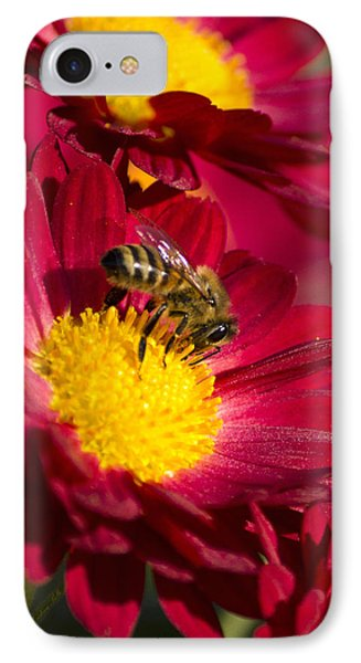 Honey Bee And Chrysanthemum Phone Case by Christina Rollo