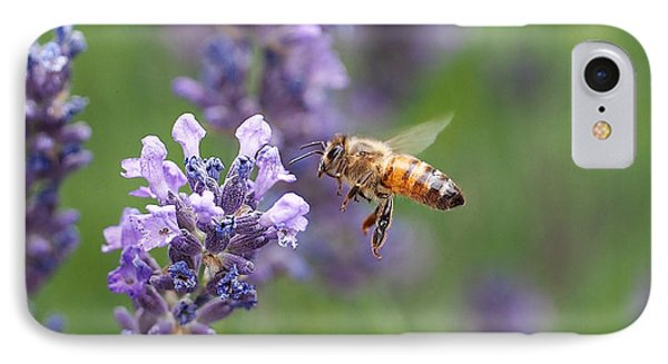 Honey Bee And Lavender IPhone Case by Rona Black