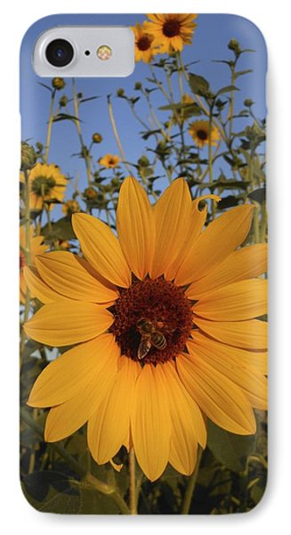 Honey Bee And Sunflowers IPhone Case