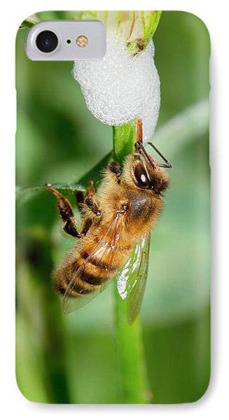 Honey Bee Drinking From Cuckoo-spit IPhone Case by Dr. John Brackenbury