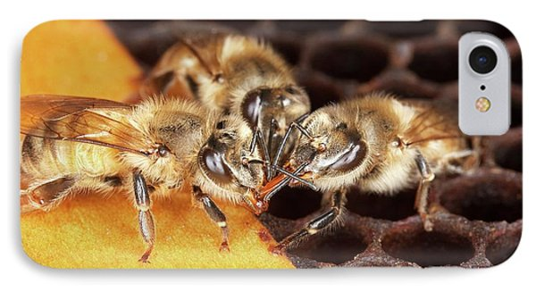 Honey Bee Mouth-to-mouth Feeding IPhone Case by Stephen Ausmus/us Department Of Agriculture