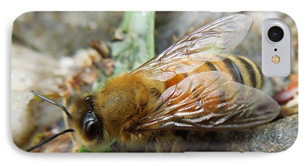IPhone Case featuring the photograph Honey Bee by Pete Trenholm