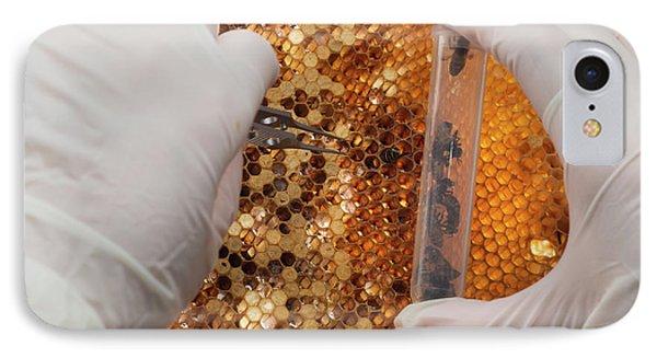 Honey Bee Research IPhone Case by Pan Xunbin