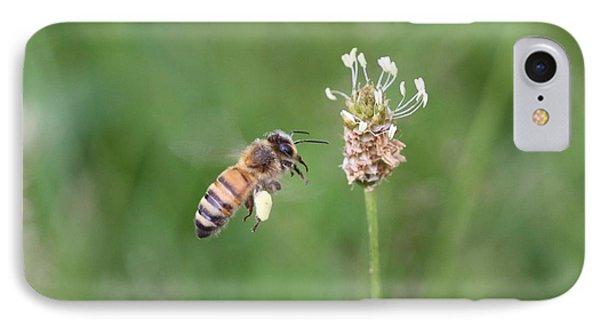 Honeybee And English Plantain IPhone Case by Lucinda VanVleck