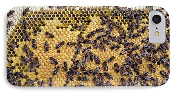 Honeybee iPhone 7 Case - Honeybee Brood Frame by Simon Fraser/science Photo Library