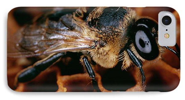 Honeybee iPhone 7 Case - Honeybee Drone by Sinclair Stammers/science Photo Library