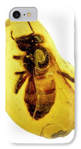 Honeybee iPhone 7 Case - Honeybee In Amber by Natural History Museum, London