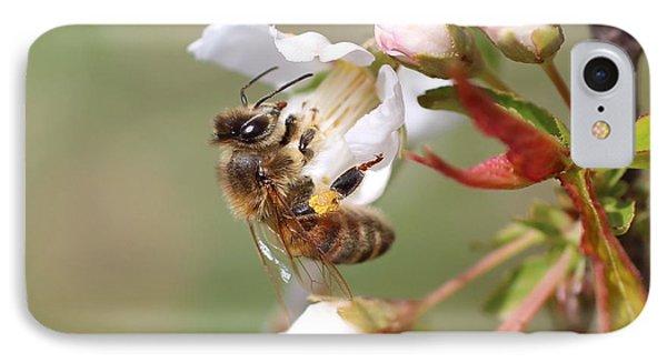 Honeybee On Cherry Blossom IPhone Case by Lucinda VanVleck