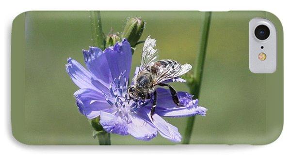 honeybee on Chickory IPhone Case by Lucinda VanVleck