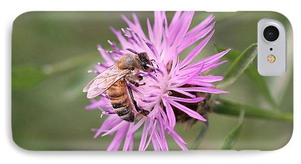 Honeybee On Ironweed IPhone Case by Lucinda VanVleck