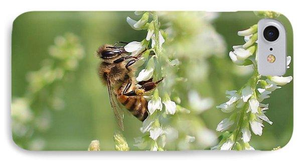 Honeybee On Sweet Clover IPhone Case by Lucinda VanVleck