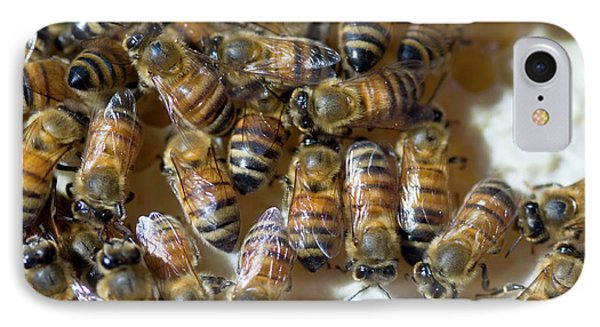 Honeybee iPhone 7 Case - Honeybees by Louise Murray/science Photo Library