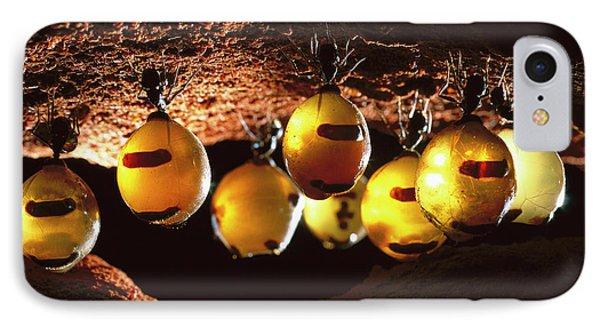 Honeypot Ants Phone Case by Reg Morrison