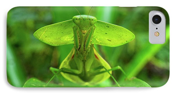 Hooded Mantis (choerododis Rhombifolia IPhone Case by Andres Morya Hinojosa