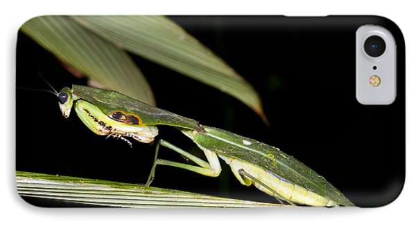 Hooded Mantis IPhone Case by Dr Morley Read