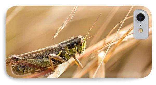 Grasshopper iPhone 7 Case - Hopper In Golden Grass by Shane Holsclaw