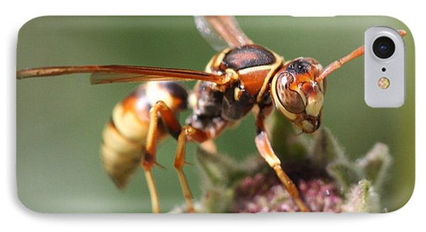 IPhone 7 Case featuring the photograph Hornet On Flower by Nathan Rupert