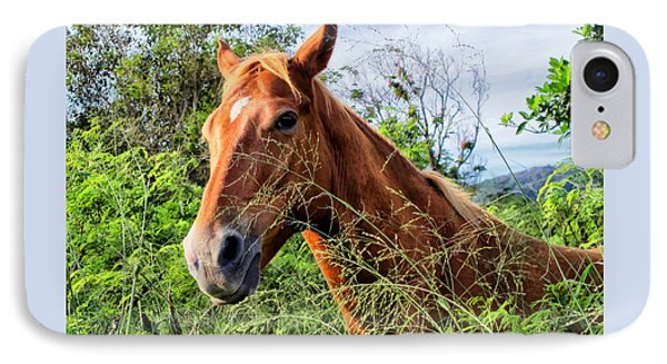 IPhone Case featuring the photograph Horse 1 by Dawn Eshelman