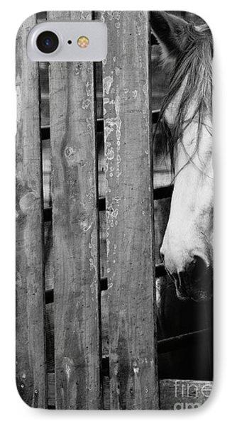Horse Board 4 IPhone Case