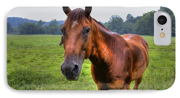 Horse In A Field IPhone Case by Jonny D
