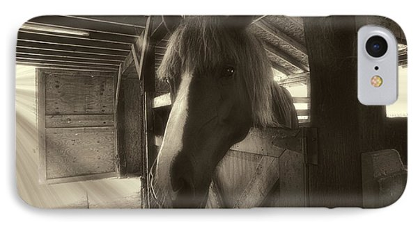 Horse In Barn Stall Phone Case by Dan Friend