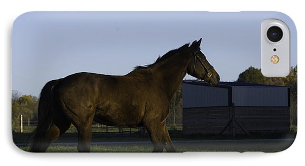 Horse In Field Phone Case by Jason Smith