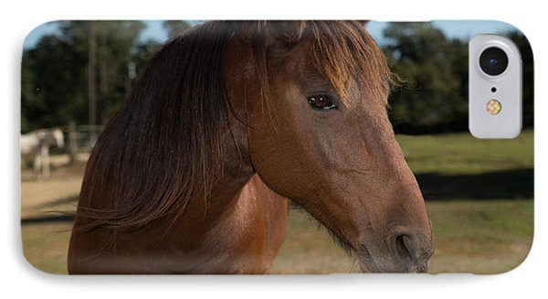 Horse In Pasture IPhone Case by Gwen Vann-Horn
