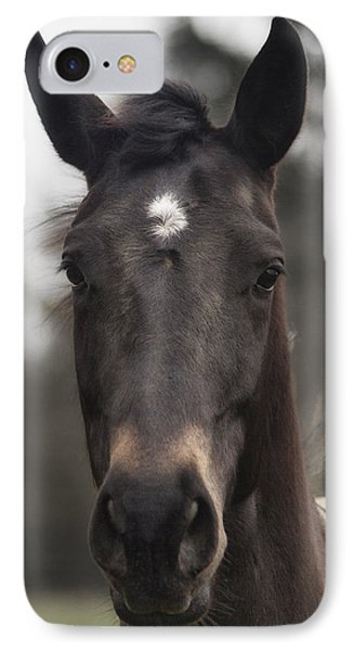 Horse With Gentle Eyes IPhone Case
