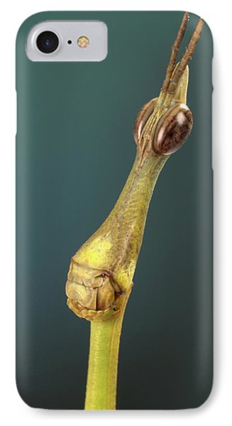 Grasshopper iPhone 7 Case - Horsehead Grasshopper by Tomasz Litwin