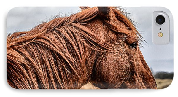 Horsey Horsey IPhone Case by John Farnan