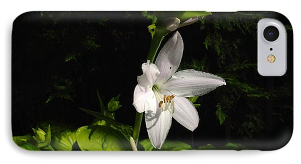 IPhone Case featuring the photograph Hosta  by Alan Lakin
