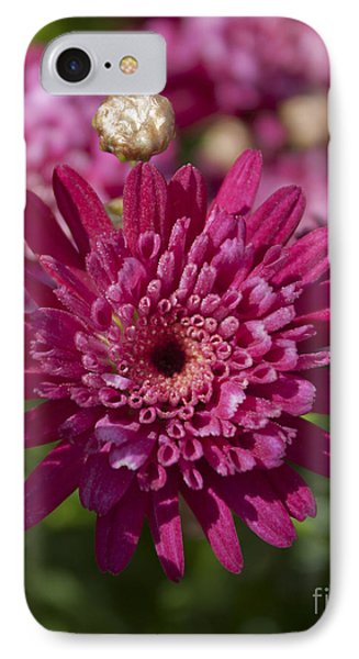 Hot Pink Chrysanthemum IPhone Case by Ivete Basso Photography