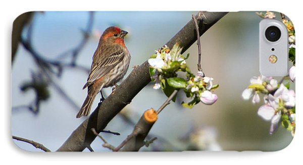 House Finch IPhone Case by Mike Dawson