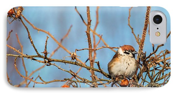IPhone Case featuring the photograph House Sparrow by Rose-Maries Pictures