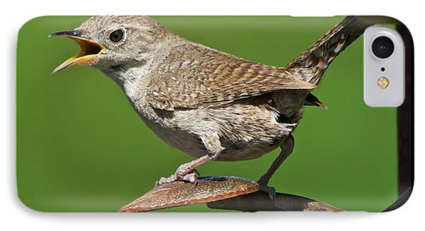 House Wren Chirping  IPhone Case by Stephen  Johnson