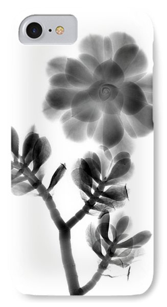 Houseleek And Foliage IPhone Case by Albert Koetsier X-ray