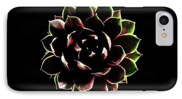 Houseleek (sempervivum Tectorum) IPhone Case by Gilles Mermet