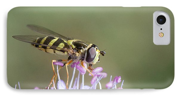 IPhone Case featuring the photograph Hoverefly - Syrphus Vitripennis by Jivko Nakev