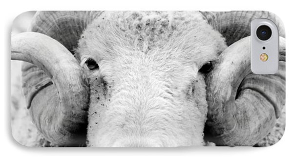 IPhone Case featuring the photograph How Ewe Doin by Courtney Webster