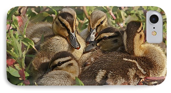IPhone Case featuring the photograph Huddled Ducklings by Kate Brown